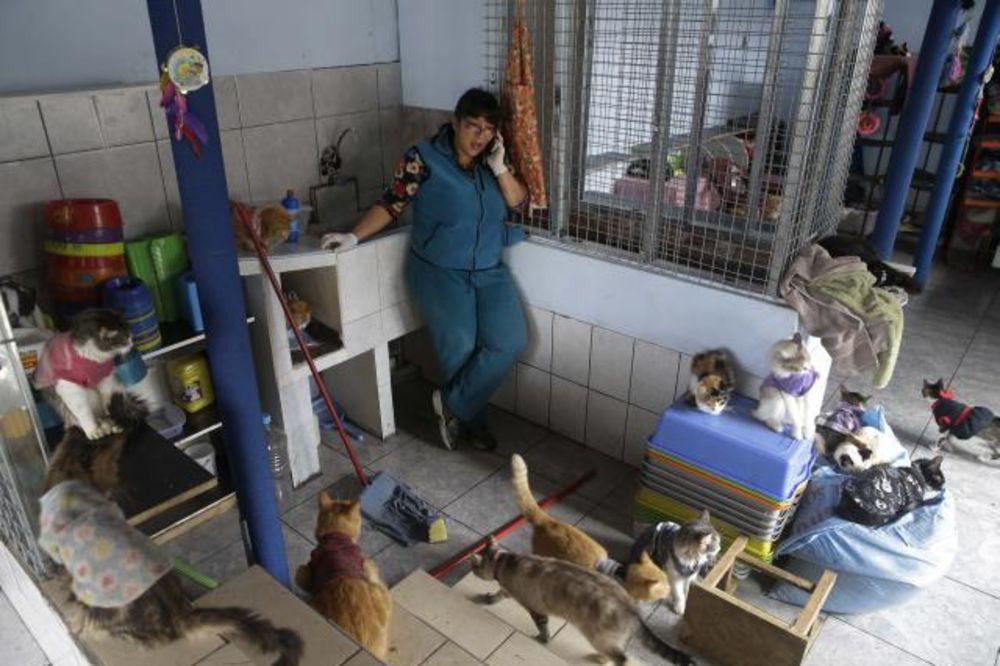 POSLEDNJE UTOČIŠTE: Neguje i voli 175 maca koje umiru od leukemije