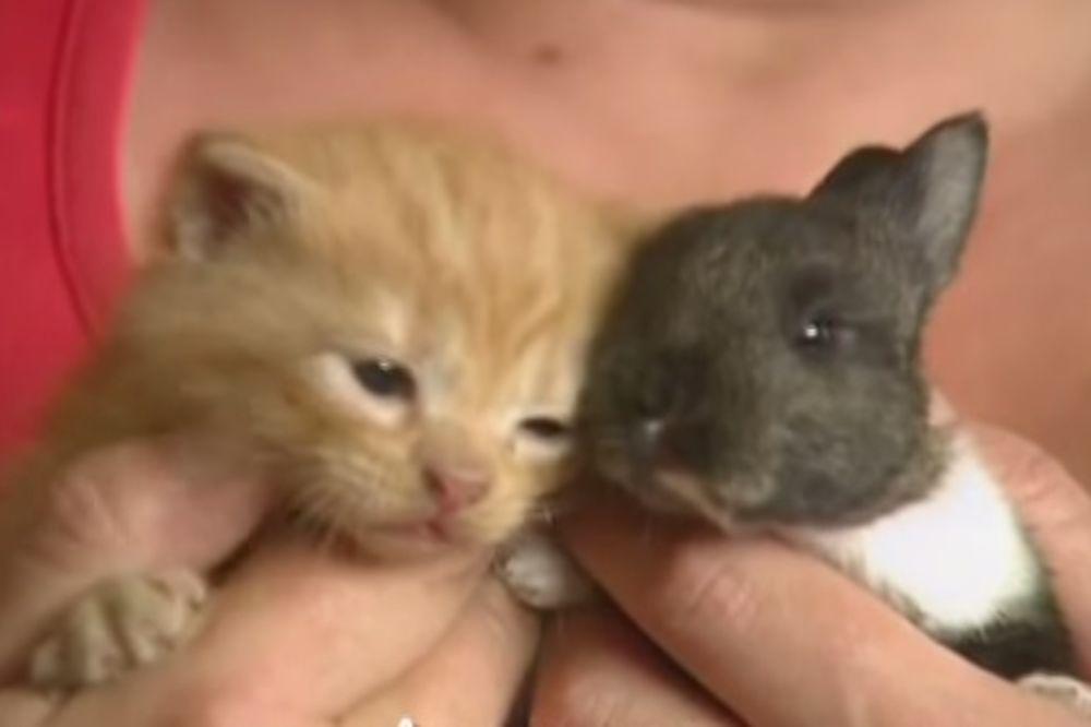 NEODOLJIVI VIDEO: Maca usvojila zeku!