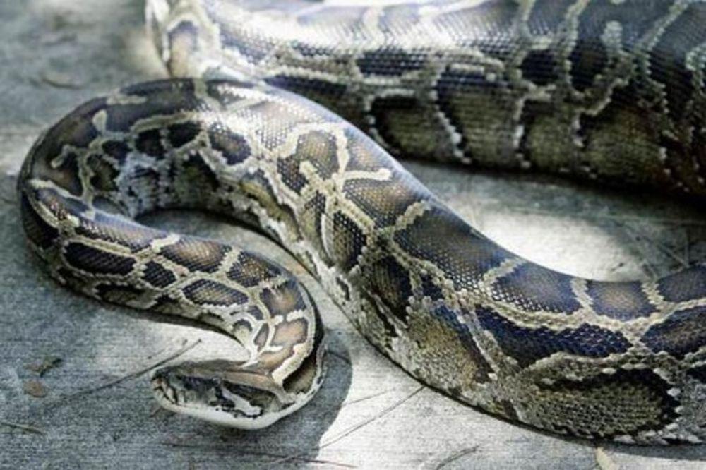 Kuću napunio zmijama pa ih prodavao preko interneta!