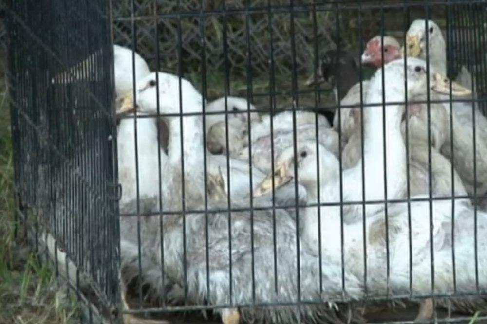 JEZIVA NOJEVA BARKA: Amerikanac uhapšen jer je držao 2.000 mrtvih i živih životinja u kući!