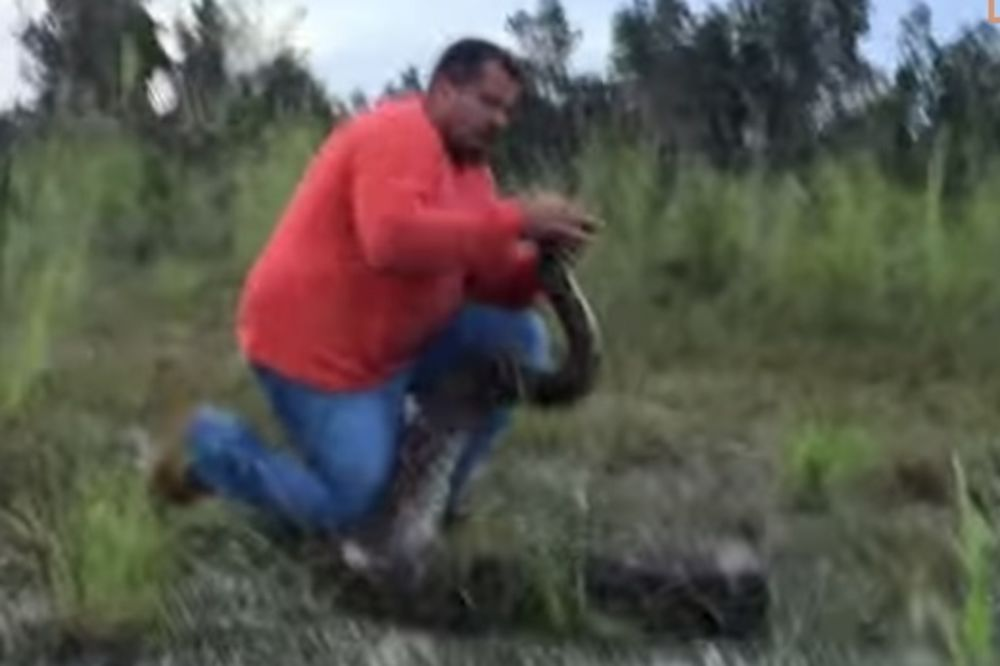 (VIDEO) ČOVEK PROTIV ZVERI: Pogledajte kako se lovac na zmije golim rukama bori protiv pitona!