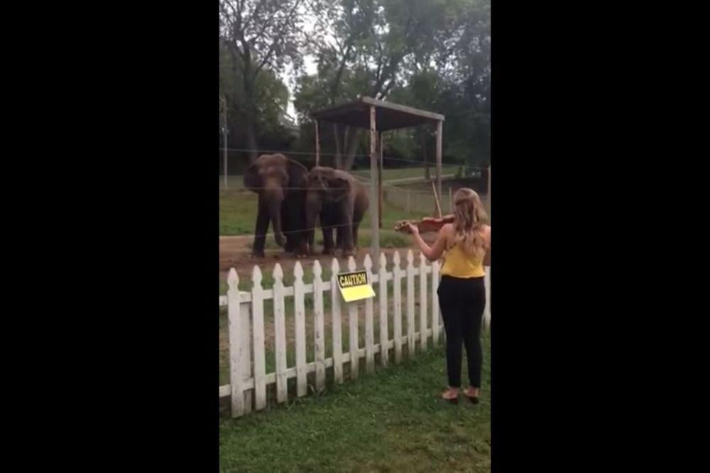 (VIDEO) OČARANE MELODIJOM: Slonice Keli i Viola zaplesale uz Bahovu muziku!
