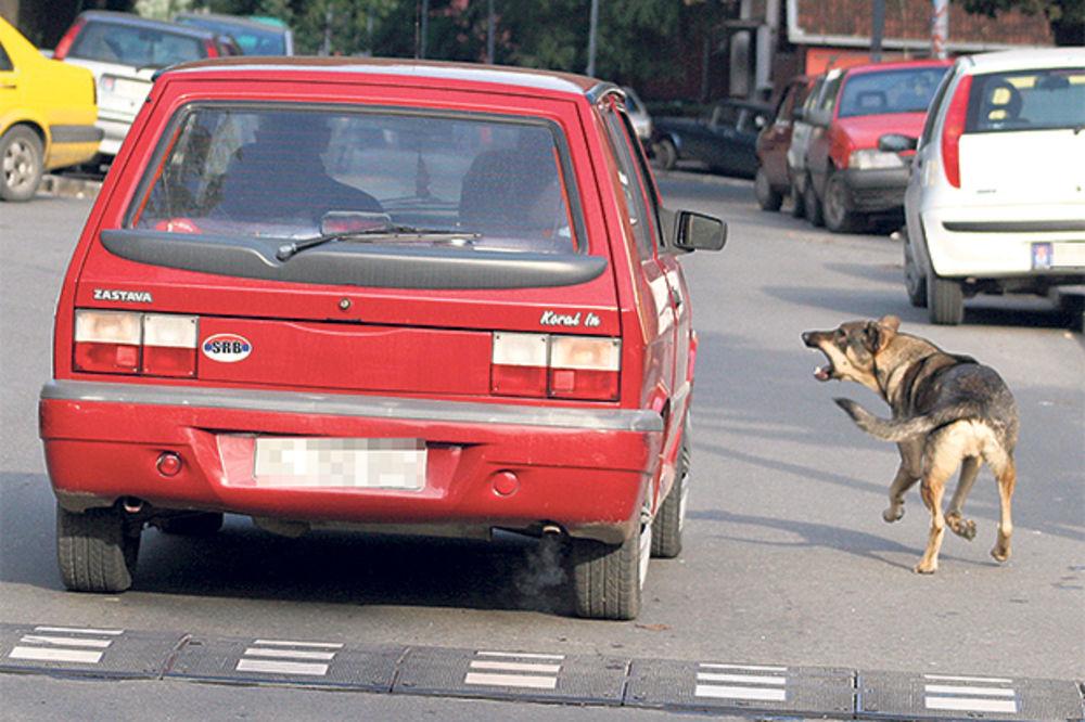 UJEDALI ČAČANE: Psi lutalice ojadili budžet za osam miliona dinara!