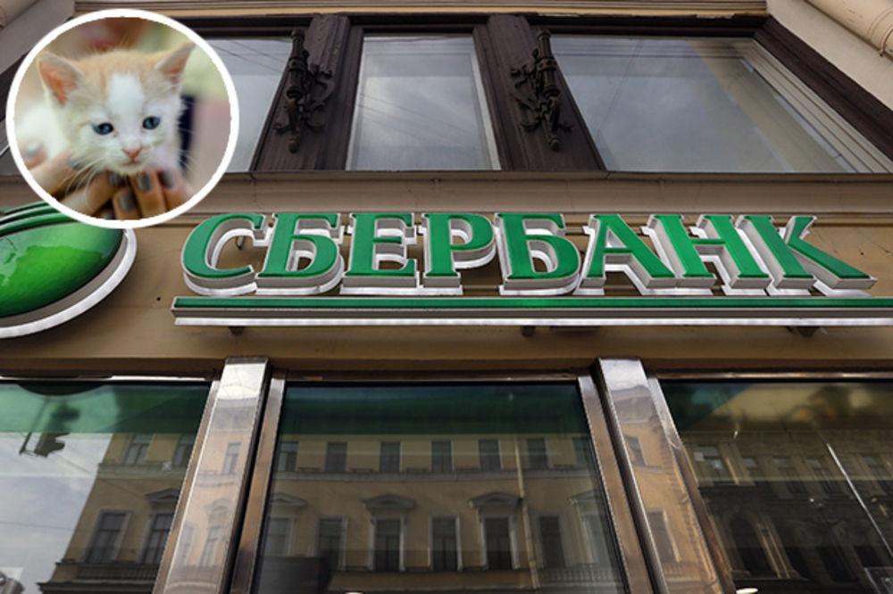 NOVA TAKTIKA SBERBANKE: Uz kredit dobijete i mačku - donosi sreću, kažu Rusi