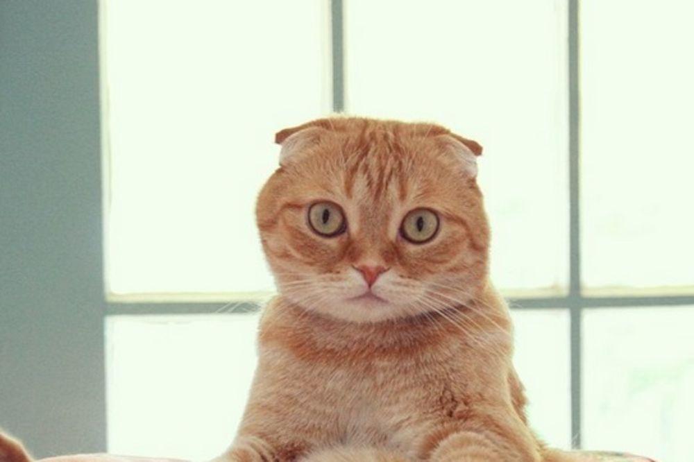 (FOTO) Mačak koji sedi postao hit na internetu: Mirno je seo za sto kao čovek!