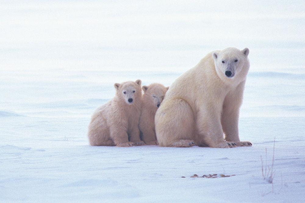 Arktik se ne otapa!