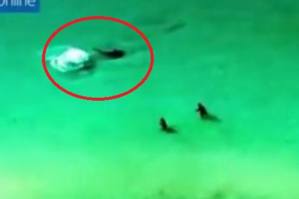 (VIDEO) OPASNA NEMAN KRENULA U NAPAD: Paru vikali da izađe iz vode, ali oni nisu čuli...
