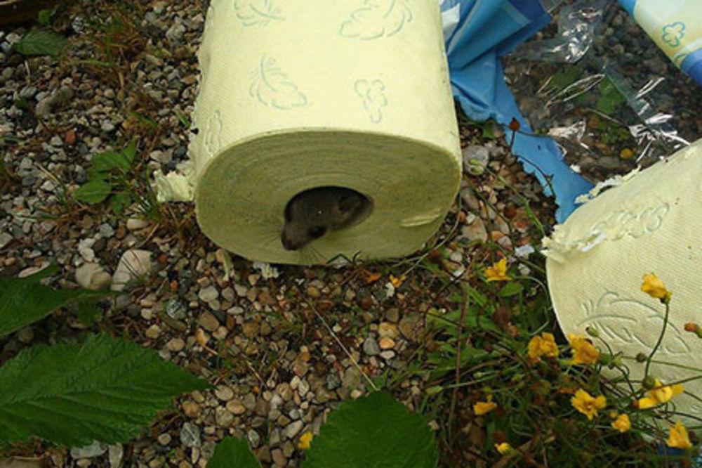 (FOTO) Našli živog glodara u rolni toalet papira!
