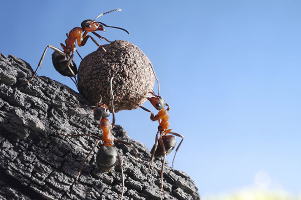 DA LI JE OVO BASNA: Bio jednom jedan vredan mrav, pa dobio otkaz!