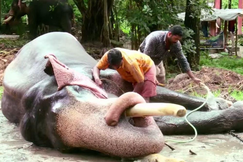 KAKAV TRETMAN: Ovde se slonovi poštuju kao kraljevi!