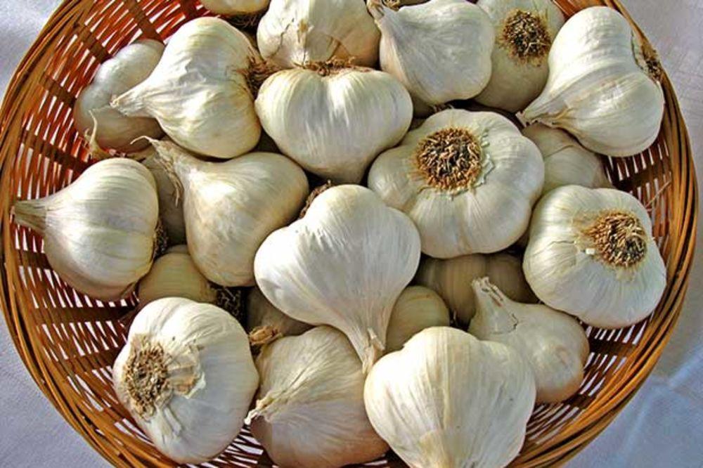 Bosut – jesenji beli luk