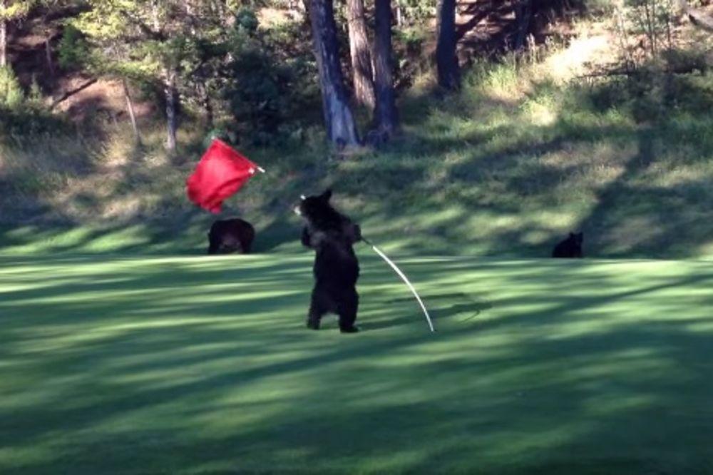 VIDEO KOJI ĆE VAM ULEPŠATI DAN: Pogledajte ples medvedića oko golf zastavice!