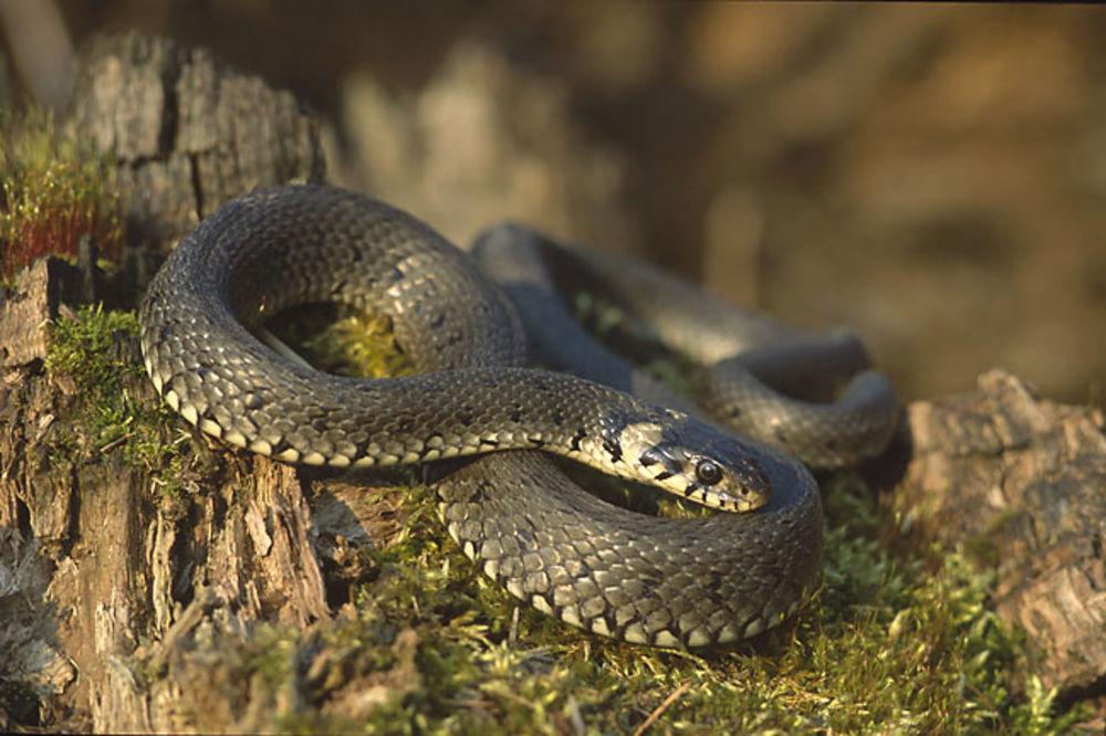 PRESEO JOJ WC: Sela na šolju kad je napalo 300 zmija!