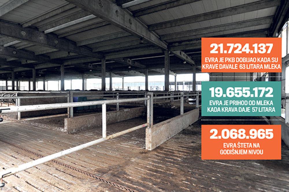 IZMUZLI PKB: Pukli 15 miliona evra za štalu, a krave im smanjile prinos mleka