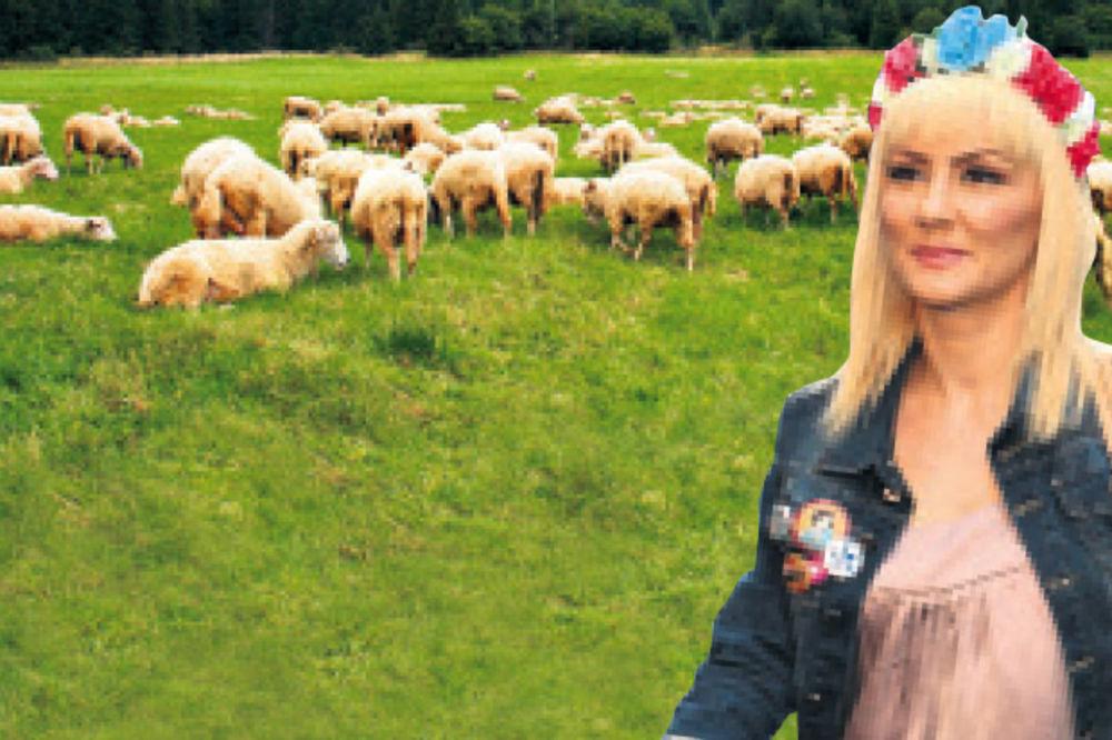 ČOBANICA: Goca Tržan otvara farmu ovaca!