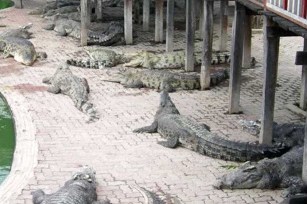 Tajlađanku rastrgli krokodili čim je skočila u jezero
