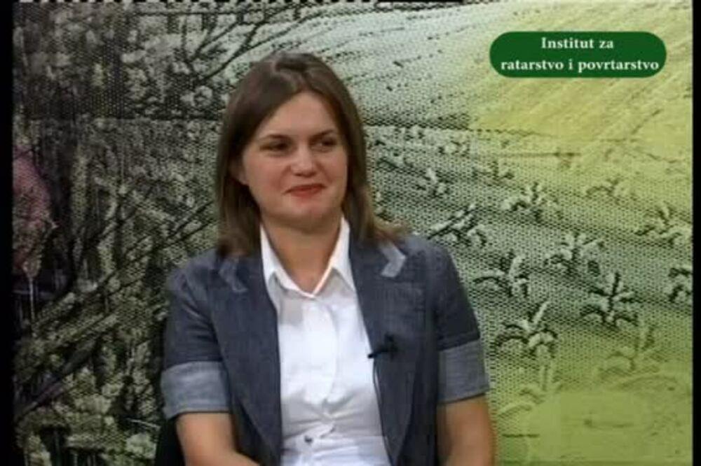 Dr Ana Jeromela Marjanović o setvi uljane repice 2014. godine