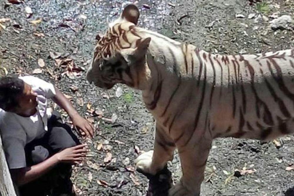 (UZNEMIRUJUĆI VIDEO) UMIRAO U BOLOVIMA: Beli tigar ubio mladića u zoo vrtu u Indiji!