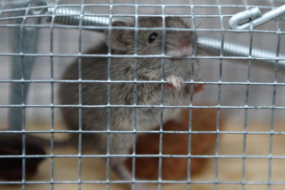 LOŠE FREKVENCIJE: Ljudi mogu da polude od uređaja za teranje miševa!