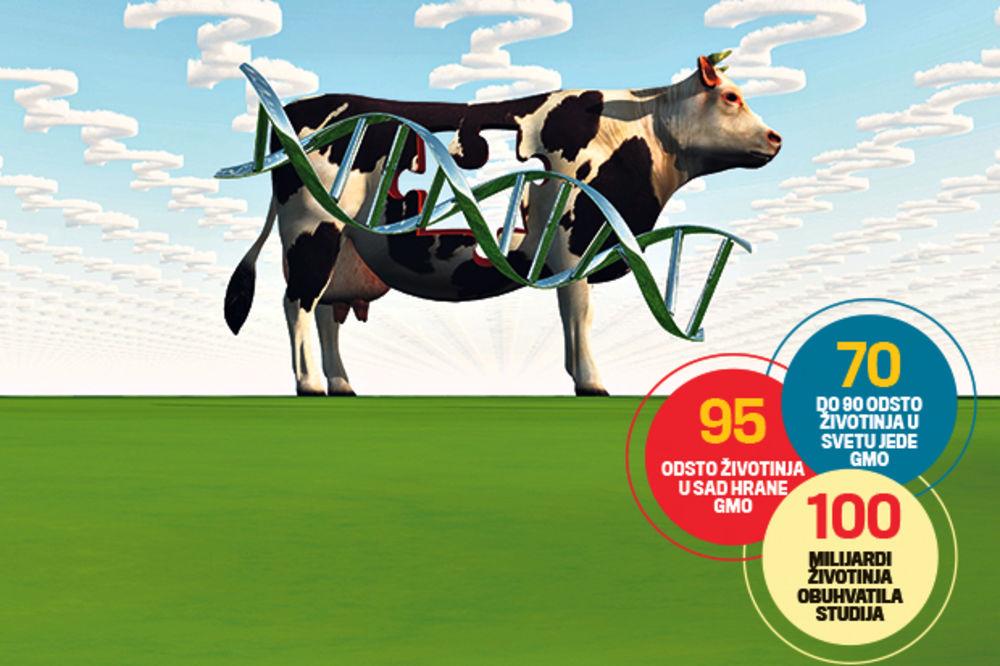 NEVEROVATNO: GM hrana nije opasna?