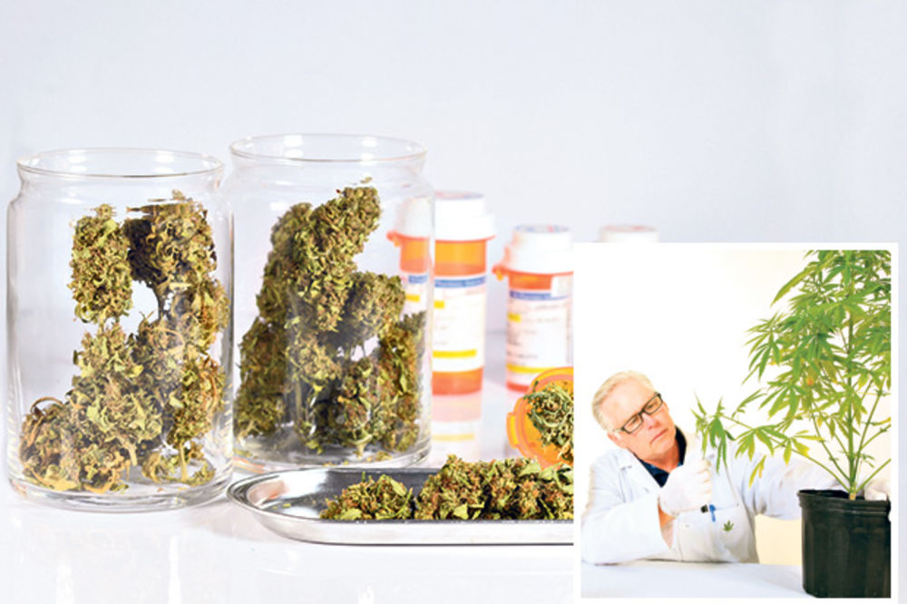 (ANKETA) KANABIS U SRBIJI: Marihuana pomaže obolelima od raka!