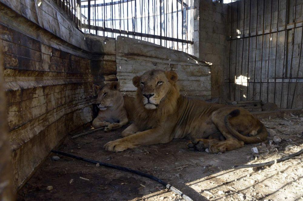 IZRAEL OTVORIO GRANICU U POJASU GAZE: Tri lava prebačena za Jordan
