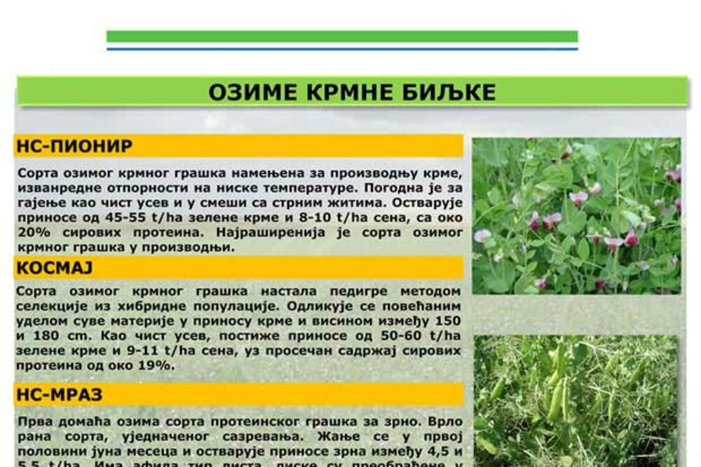 OZIMI STOČNI KELJ – Prva prolećna zelena hrana