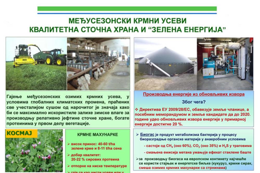 Ozime krmne mahunarke - visok prinos, odličan kvalitet, niski troškovi proizvodnje