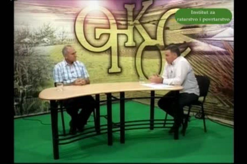 Dr Radivoje Jevtić o setvi pšenice