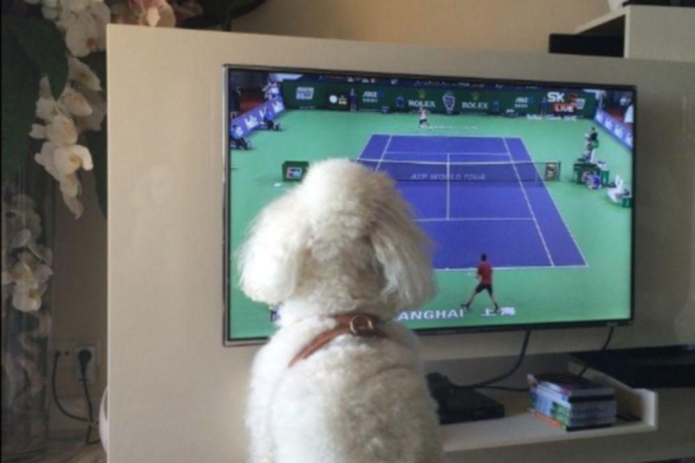 KAD PIER NAVIJA ZA NOVAKA: Đokovićev pas prati gazdu na televiziji
