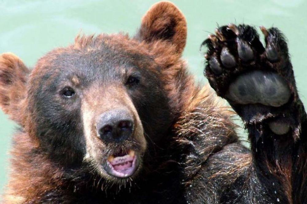 ZVER SE VRATILA: Panika u Salcburgu zbog medveda koji napada po katunima!
