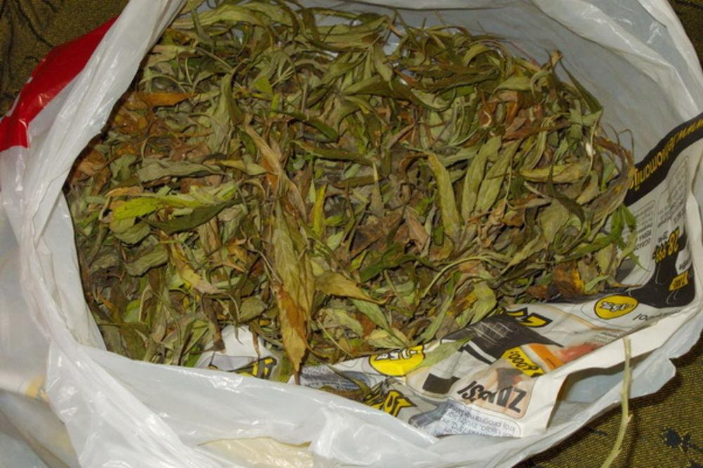 UHAPŠEN NIŠLIJA: Policija zaplenila šest kilograma marihuane!