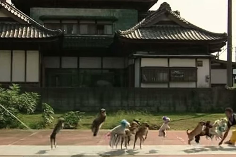 UŠLI U GINISOVU KNJIGU REKORDA: Ovih 13 pasa zajedno preskaču uže!