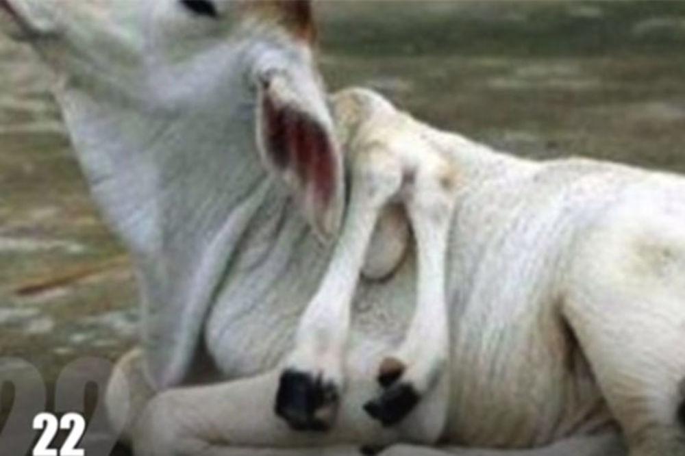 (VIDEO) DA SE KOSA DIGNE: Genetske greške dovele su do rađanja ovih zastraujućih stvorenja