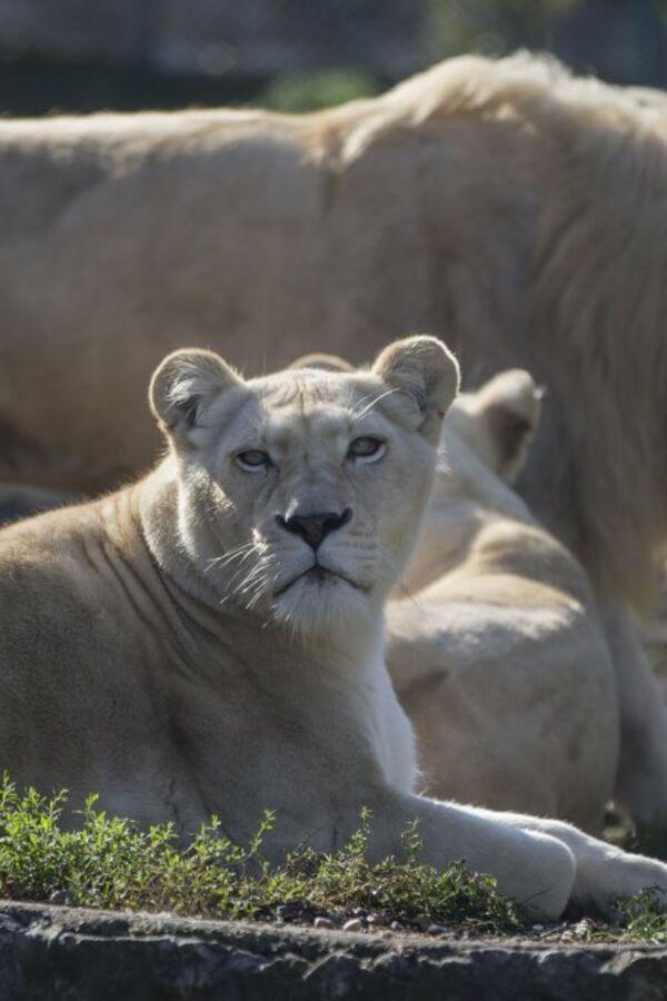(VIDEO) ZA ONE SA DUBOKIM DŽEPOM: 10 najskupljih životinja na svetu!