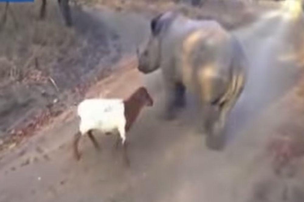 (VIDEO) Ovo neobično prijateljstvo će vam ulepšati sumoran dan!