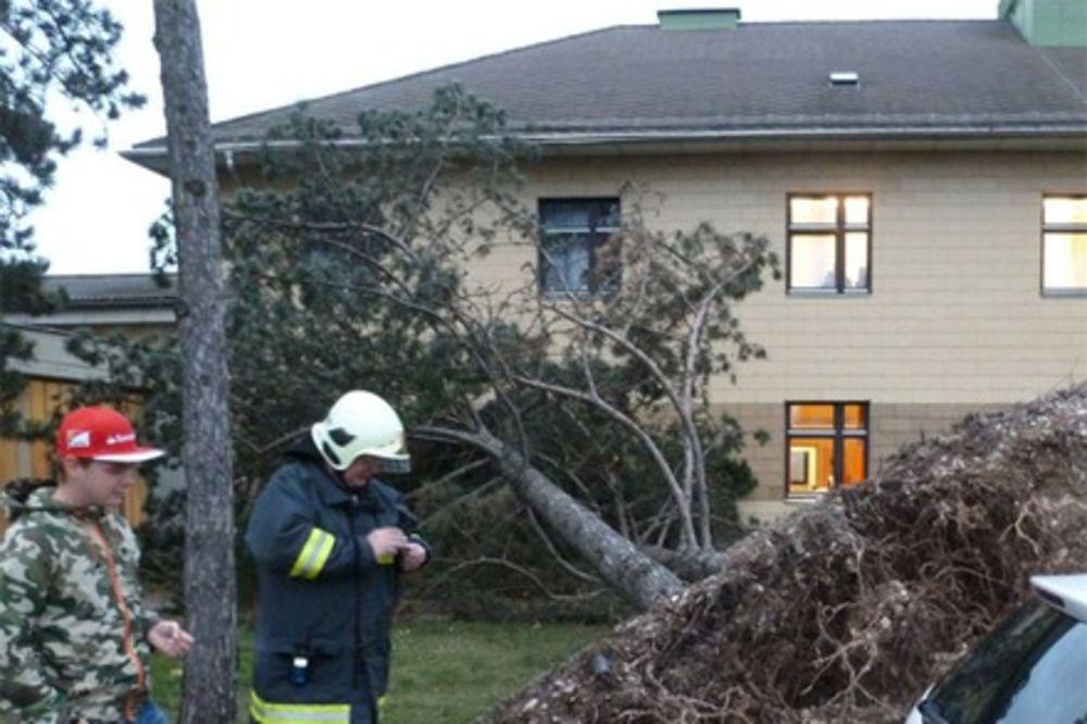 (FOTO) MONSTRUM OLUJA: Uragan čupao drveće iz korena i nosio krovove!