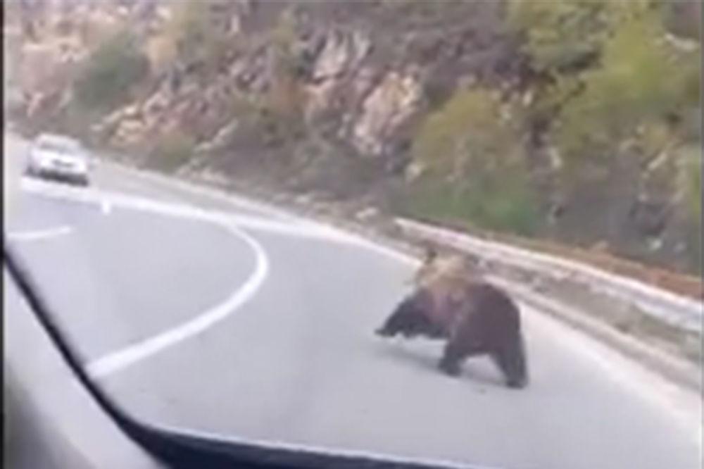 (VIDEO) NESVAKIDAŠNJE: Pogledajte kako je mečka trčala između kola na putu Ohrid-Kičevo