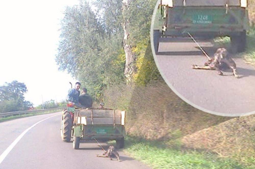 (FOTO) UŽAS KOD ALEKSINCA: Zavezali psa za traktor i vukli ga putem!