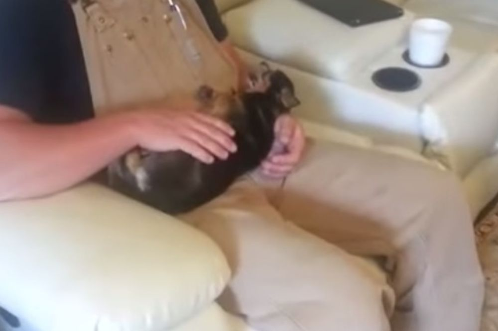 ODGLUMIO ZA OSKARA: Pas se pravi da je mrtav čim ga mladić uzme u ruke