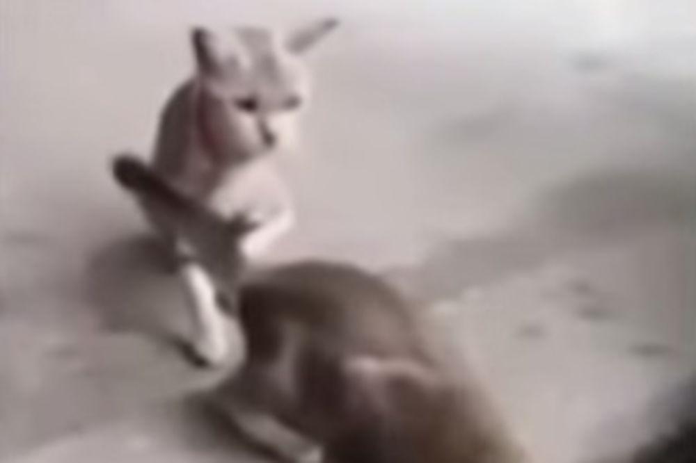 POTRESNO: Radoznalost je ubila mačku, ali bukvalno!