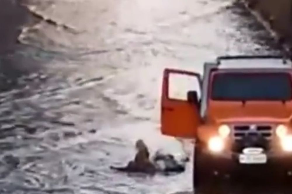 (VIDEO) Uleteo džipom u vodu i spasao slepog psa od sigurne smrti