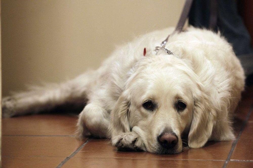 Slepa žena poljubila psa vodiča, udarila glavom o sto, a ono što se dogodilo će vas šokirati!