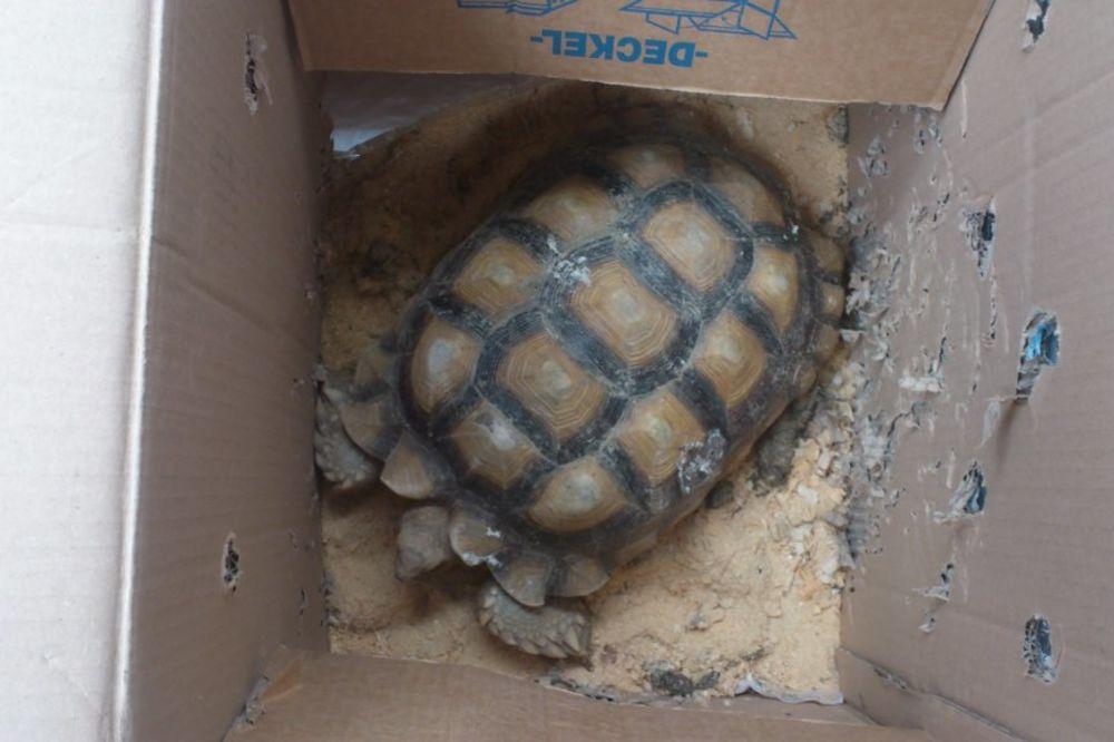 PREŠEVO: Carinici i policajci sprečili šverc dve kornjače!