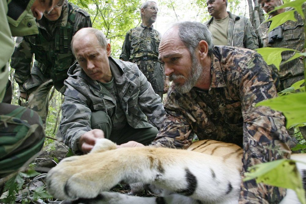 (VIDEO) KRVOŽEDAN: Putinov tigar snimljen kako jede psa!
