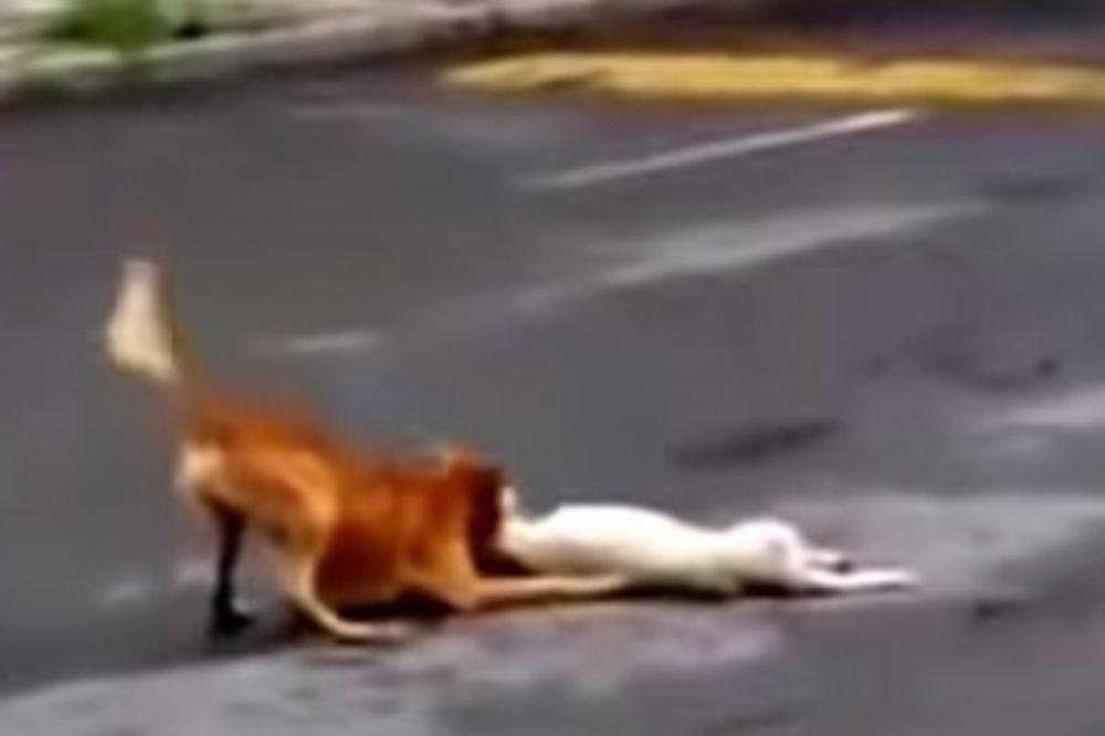 OVAJ VIDEO JE GANUO CEO SVET: Pas uzalud pokušava da spase svog prijatelja, iako je već kasno