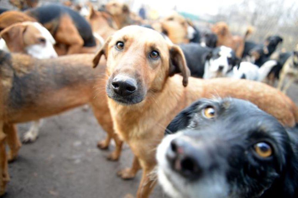 (FOTO) NAREĐENO ISELJENJE: Neizvesna sudbina 450 pasa u azilu u Nišu