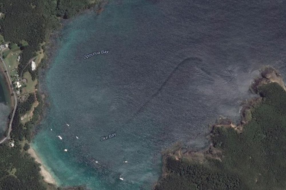 PREVELIKO ZA AJKULU, PREBRZO ZA KITA: Džinovsko čudovište snimljeno na Novom Zelandu