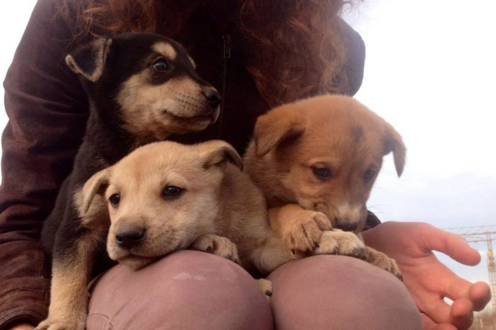 (FOTO) LJUBITELJI ŽIVOTINJA, POMOZITE: 8 štenaca prepušteni sami sebi, udomite ih!