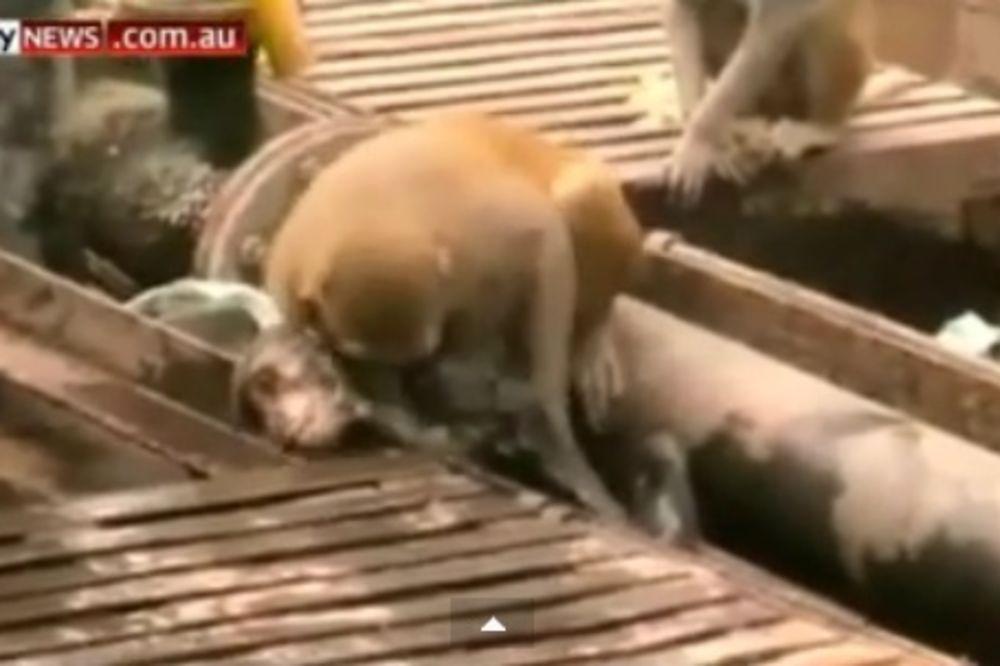(VIDEO) NEPROCENJIVO: Rizikovao je svoj život da bi spasao svoga druga!